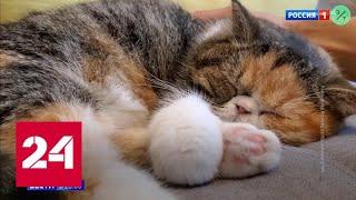 Собаки более устойчивы к коронавирусам, чем кошки - Россия 24