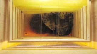 Wabenbau / Honeycombs being built [2 months timelapse]