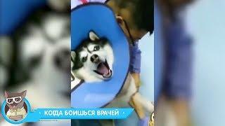 ЛУЧШИЕ ПРИКОЛЫ 2018 МАЙ — Заведи собаку