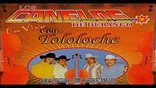 Los Canelos De Durango - El Cajoncito (Fiesta Del Amigo Sanchez Con Tololoche)