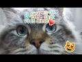 8 preuves que votre chat vous aime - Comprendre son chat [Crêpe au Citron]
