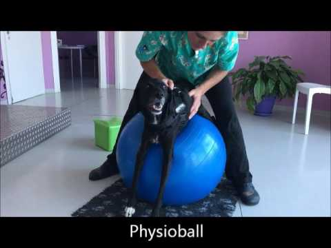 Macchina di esercizio ellittica di combustione di grasso