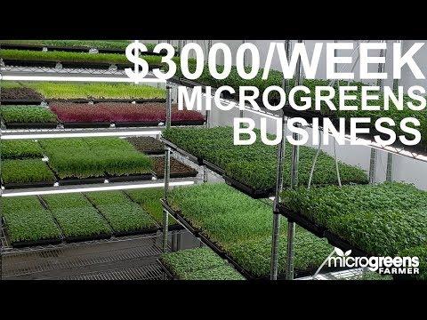, title : 'microgreens business selling $3000 per week to restaurants
