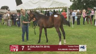 Sulamani x Dalraith 2016 at TBA Stars of Tomorrow Foal Show