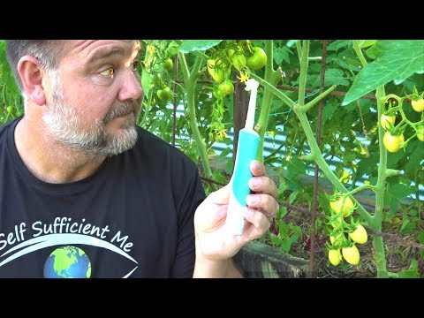 , title : 'Toothbrush Tomato Trick to Get Better Fruit Set & Flower Pollination