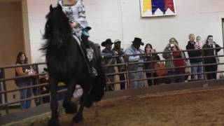 Albert, Friesian Horse Presentation