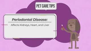 Pet Care Tips – Periodontal Disease