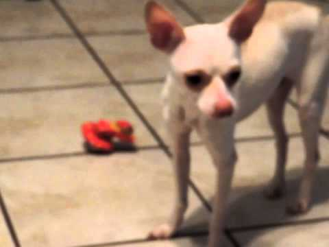 Tony, new Fosterdog
