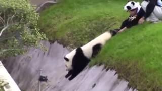Ben Yoruldum Hayat Panda Versiyon