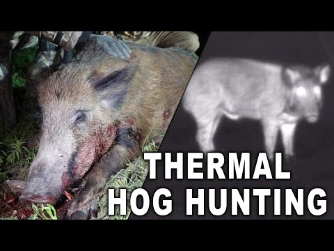 PITCH BLACK Thermal Hog Hunting!