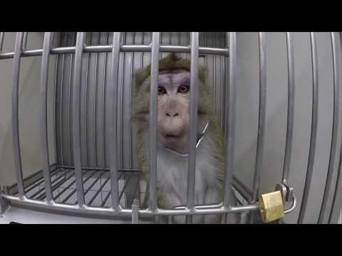 Un vídeo muestra el terrible maltrato animal en un laboratorio alemán