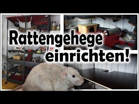 Rattenkäfig / Savic Suite Royal XL einrichten (Zeitraffer) | Oktober 2017