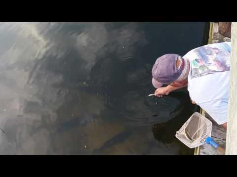 Он может ловить рыбу голыми руками!