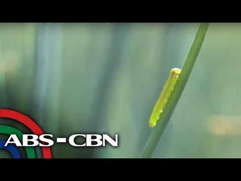 Kung paano upang mangolekta ng dumi para sa pagtatasa ng Giardia