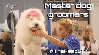 Master dog groomers Australia - The Feed