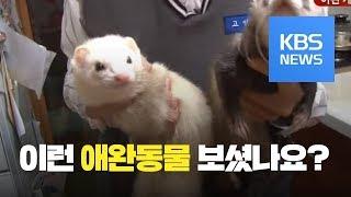 [화제포착] 개·고양이는 싫다! 희귀한 애완동물