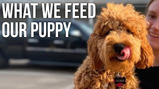 What We Feed Dobie | Cockapoo Puppy