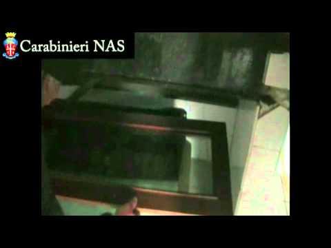 NAS Carabinieri Macellazione clandestina a Busto Arsizio