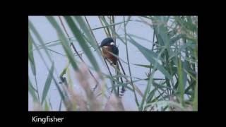 Birding UK (Old Moor RSPB Sep 2016)
