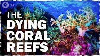 Coral Reefs Are Dying. Here's How We Can Save Them | Hot Mess 🌎
