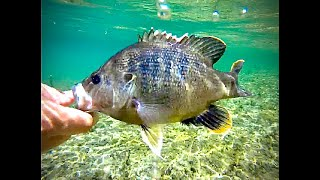 CRYSTAL CLEAR Frio River Fishing (Concan Tx)