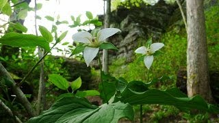 Giant City State Park: Trillium Trail