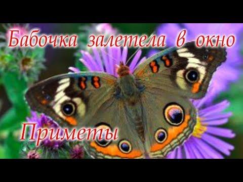Бабочка залетела в дом Приметы