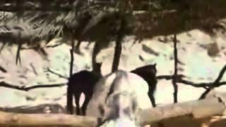 Hidalguias De Un Pajarillo - Fernando Hidalgo  (Video)