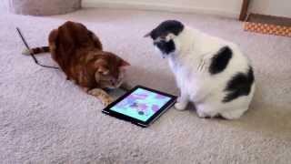 Всемирная паутина запутала кошек .