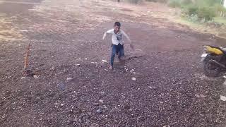 Dada bhamdar dogs(2)