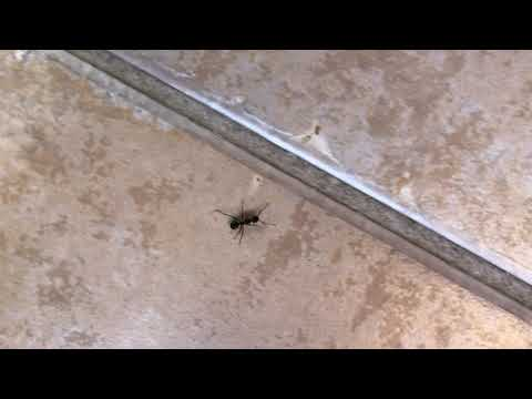 You won't believe how these carpenter ants infested this office building in Eatontown, NJ.