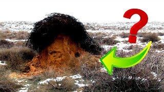 Охота на волков в степи. Как мы пытались спасти Астраханскую степь от волков.