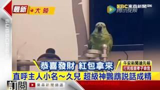 大陸神鸚鵡超愛聊 詞彙量等同漢語4級標準