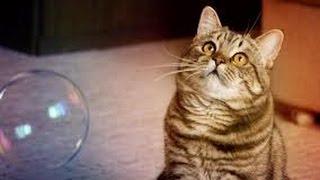 Cat playing with soap bubbles (Кошка играет с мыльными пузырями)