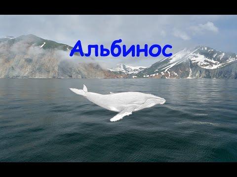 Русская Рыбалка 3.99 Кит горбатый альбинос