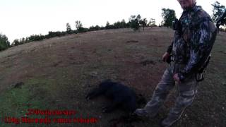 wild boar hunting australia
