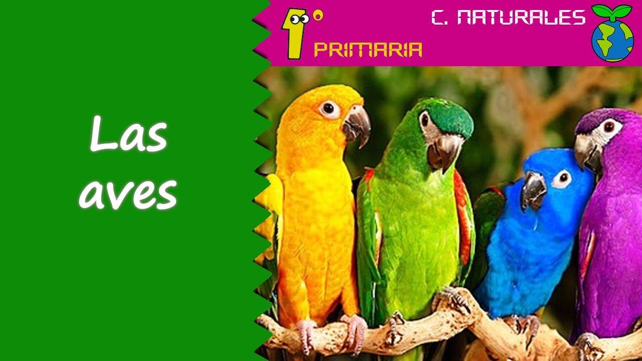 Ciencias de la Naturaleza. 1º Primaria. Tema 5: Las aves