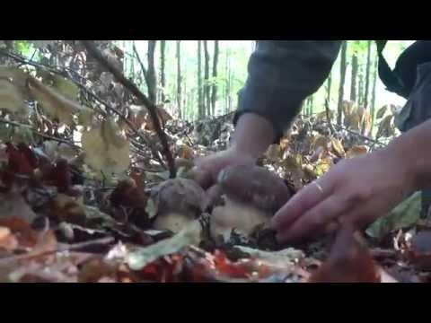 Che fare sopportando tra le dita un fungo