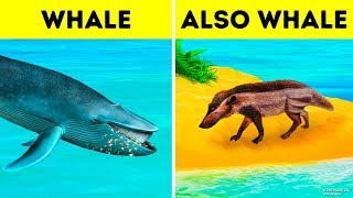 Why Whales Became the Biggest Animal of All Time