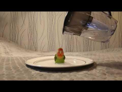 Happy Love Bird has a Bath in a Dish