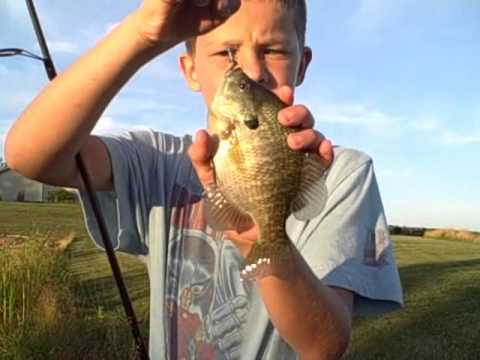 Bass & Gill Fishing in the Pond 8-10-12