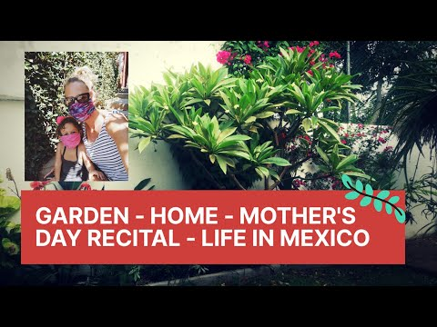 MORE GARDENING, HOME RENO - MOTHERS DAY RECITAL - LIFE IN MEXICO