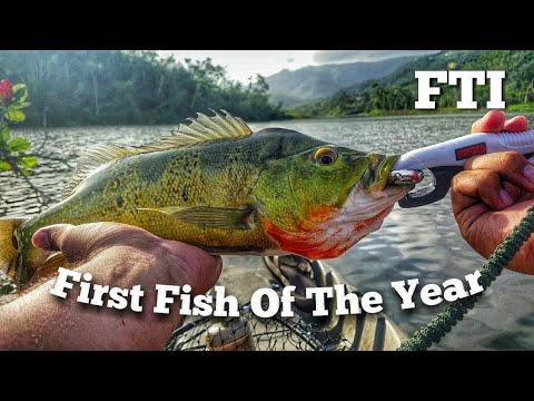 Una serie di film educativi su pesca da fratelli