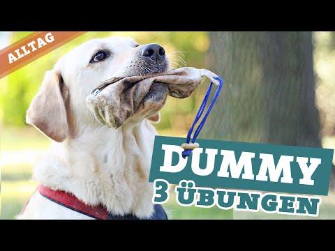 Dummytraining Hund | 3 Übungen Hundebeschäftigung | Dummy apportieren Labrador Hundekanal