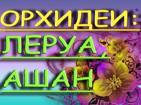 """ЛЕРУА:прекрасный ЗАВОЗ ОРХИДЕЙ+Ашан,16.09.21,ТЦ """"Космопорт"""",Самара,ул.Дыбенко,30."""
