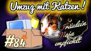 Umzug mit Katze stressfrei gestalten-Checkliste. Fräulein Maja empfiehlt Teil 84
