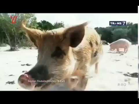 7 Pulau Hewan Didunia - On The Spot Trans7