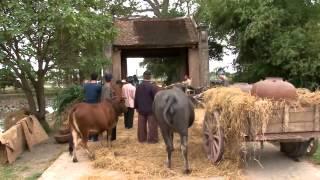 [FULL HD] Trailer phim Hài Tết 2014 - Chôn Nhời