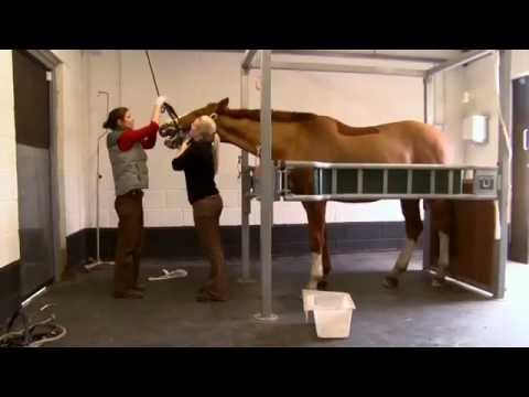 The Horse Vets
