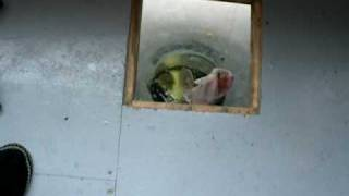 preview picture of video 'Ice Fishing, Lake Nippissing Feb 2009 Pike Caught'